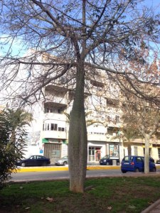 träd Habaneras