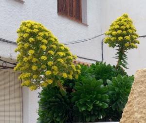 Blomma 3