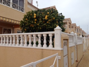A-C citronerjpg