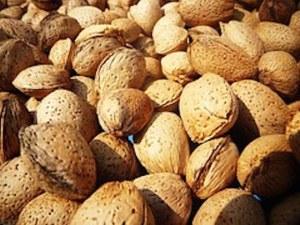almonds-501534__180