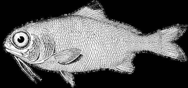 fish-976080__180