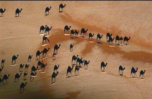 kameler kopia