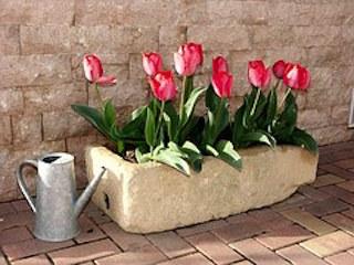 tulips-1002203__180