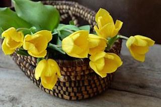 tulips-708410__180