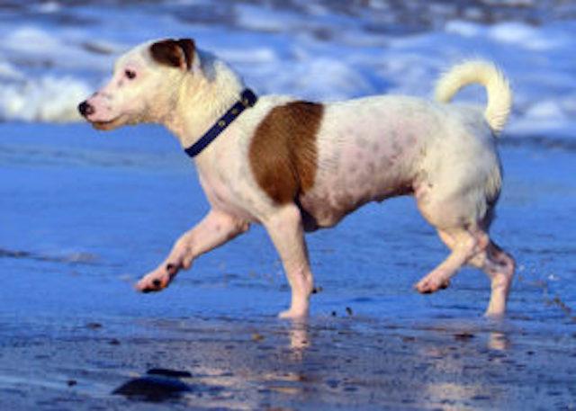 hund-pa-strand-300x214