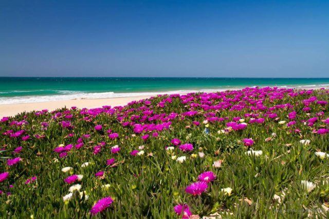 springtime_spain-640x427